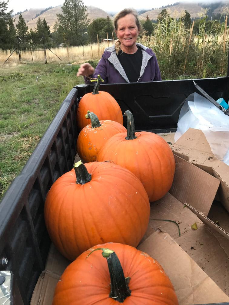 Pumpkin Harvest at Almosta Farm Cove Oregon