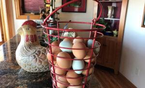 Free Range Eggs – 1 Dozen