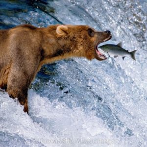 Westover Capital Advisors - Thomas Mangelsen's 'Catch of the Day'
