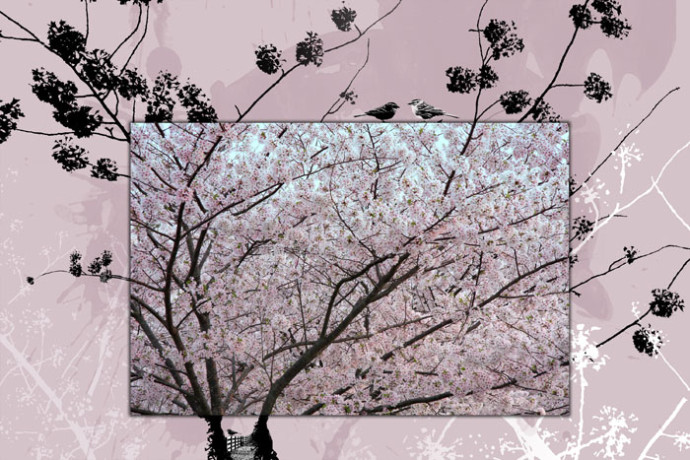 In the Pear Tree, photo composite by Maura Harrison