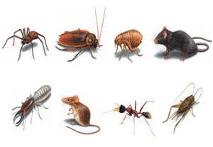 Pest Control Services Broken Arrow, Jenks, Bixby, Coweta, Tulsa, Oklahoma