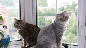 cats-windowsill-home-resting