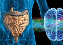 Food For Thought: How Your Belly Controls Your Brain