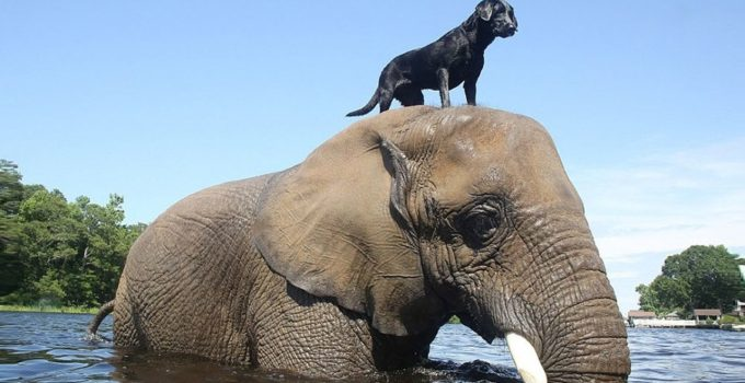 7 Unlikely Animal Friendships That We Humans Can Learn From