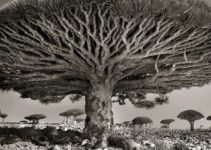 Ancient Trees: This Woman Spent 14 Years Photographing The World's Oldest Trees