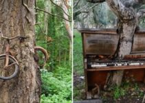 20+ Photos Of Mother Nature Winning The War Against 'Civilization'
