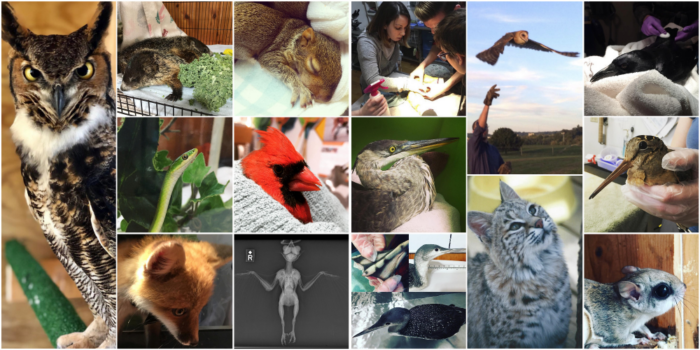 Various animals rescued by the Southwest Virginia Wildlife Center of Roanoke.
