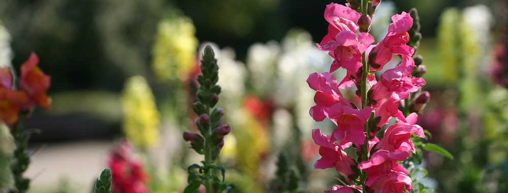 2019 Year of the Snapdragon!