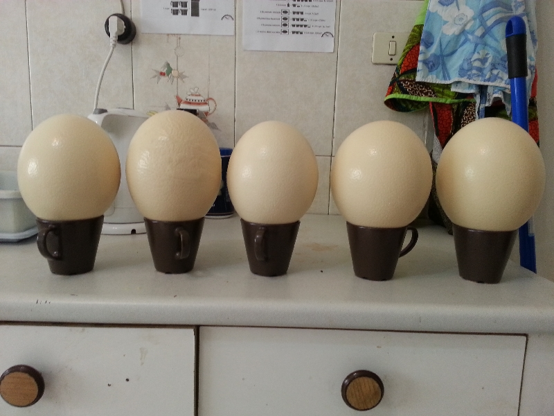 08-eggs ready to pain with Grandma