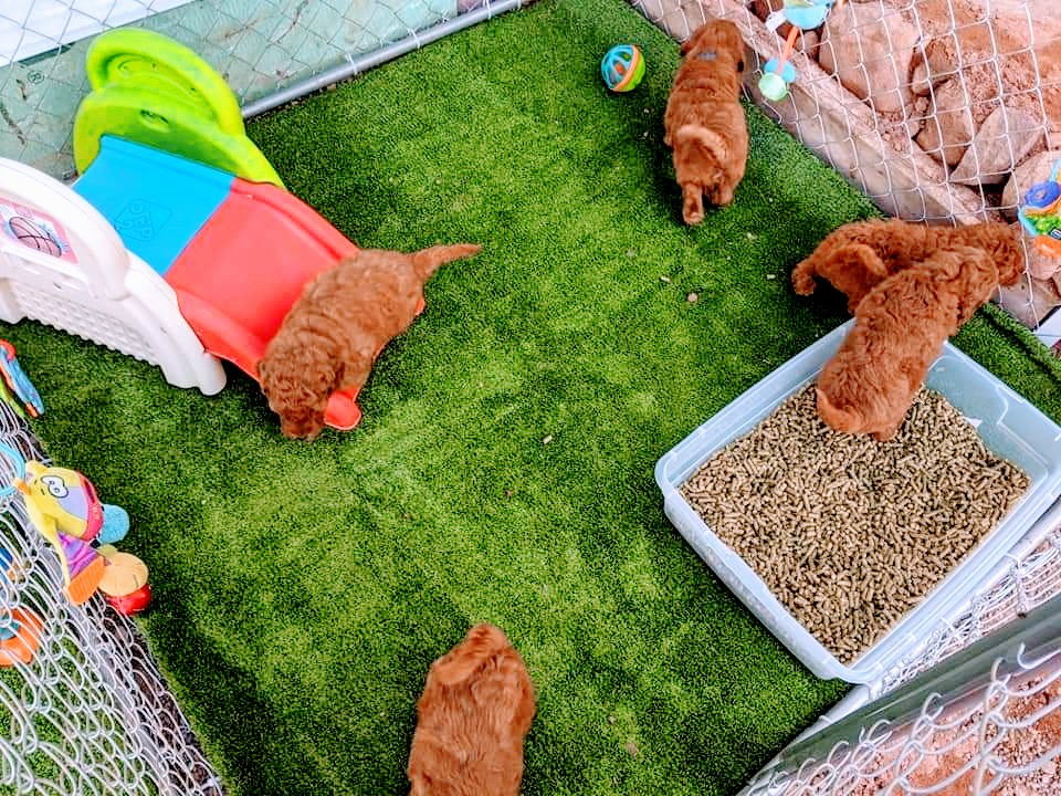 Doodle Dog Hill Play Area_4