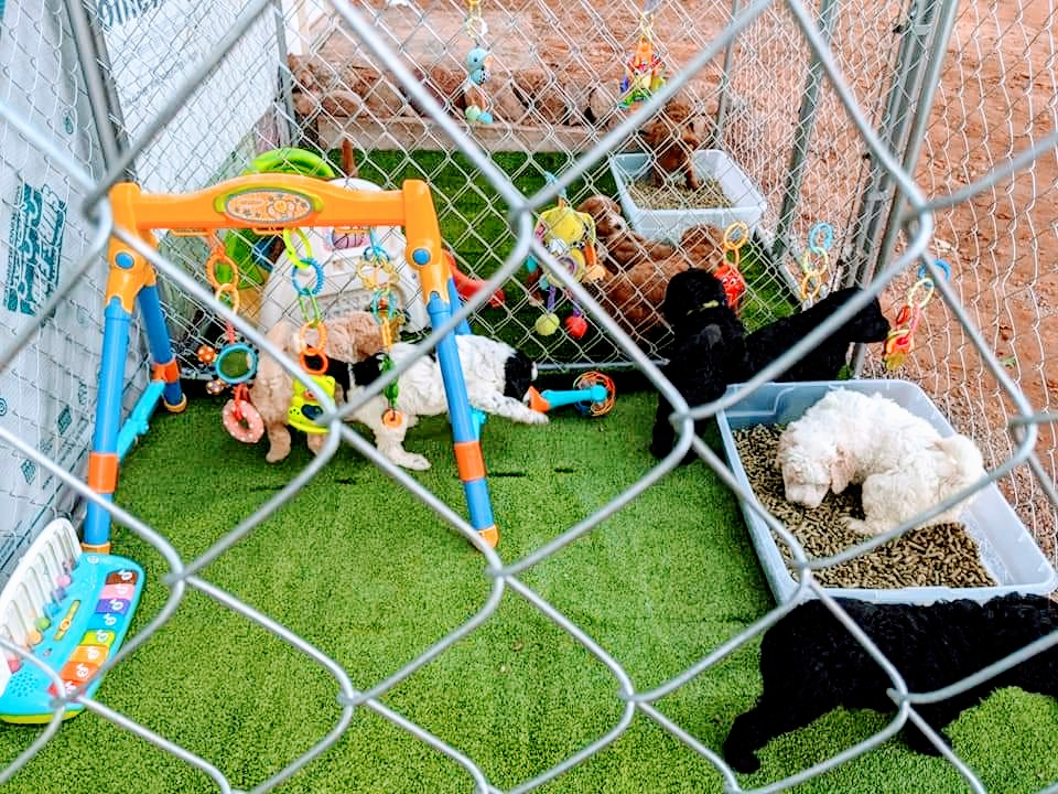 Doodle Dog Hill Play Area_5