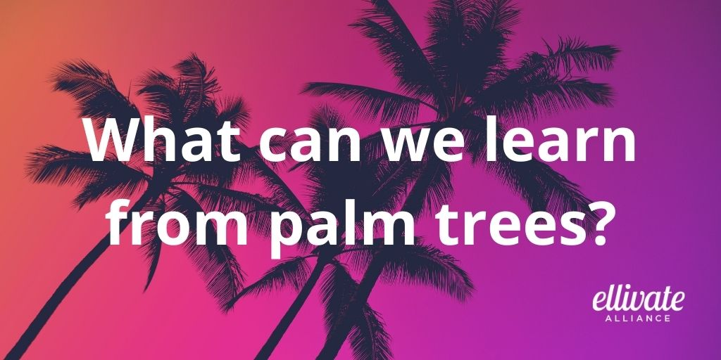 What can we learn from palm trees?