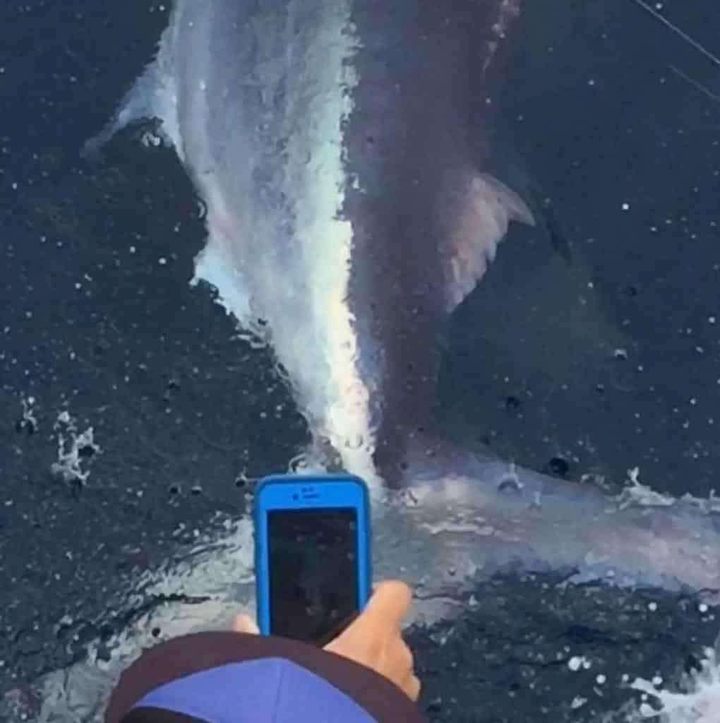 Marlin - October 16th 2018