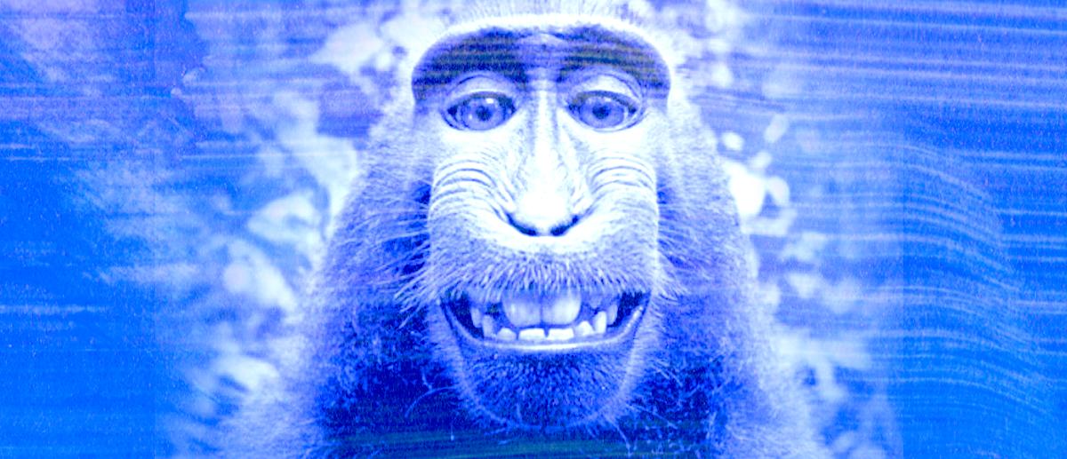 Macaco Selfie