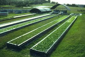 Aquaponic-farming