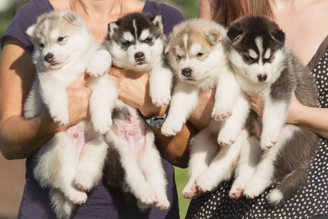Pups 2 Pooches
