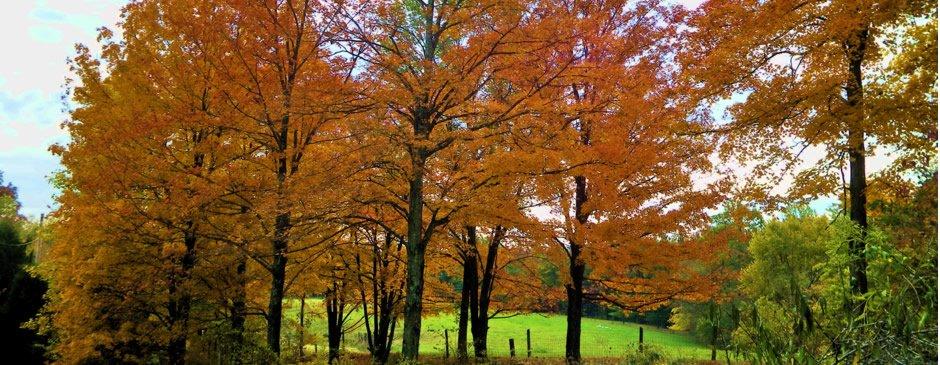 Fall Festival of Leaves
