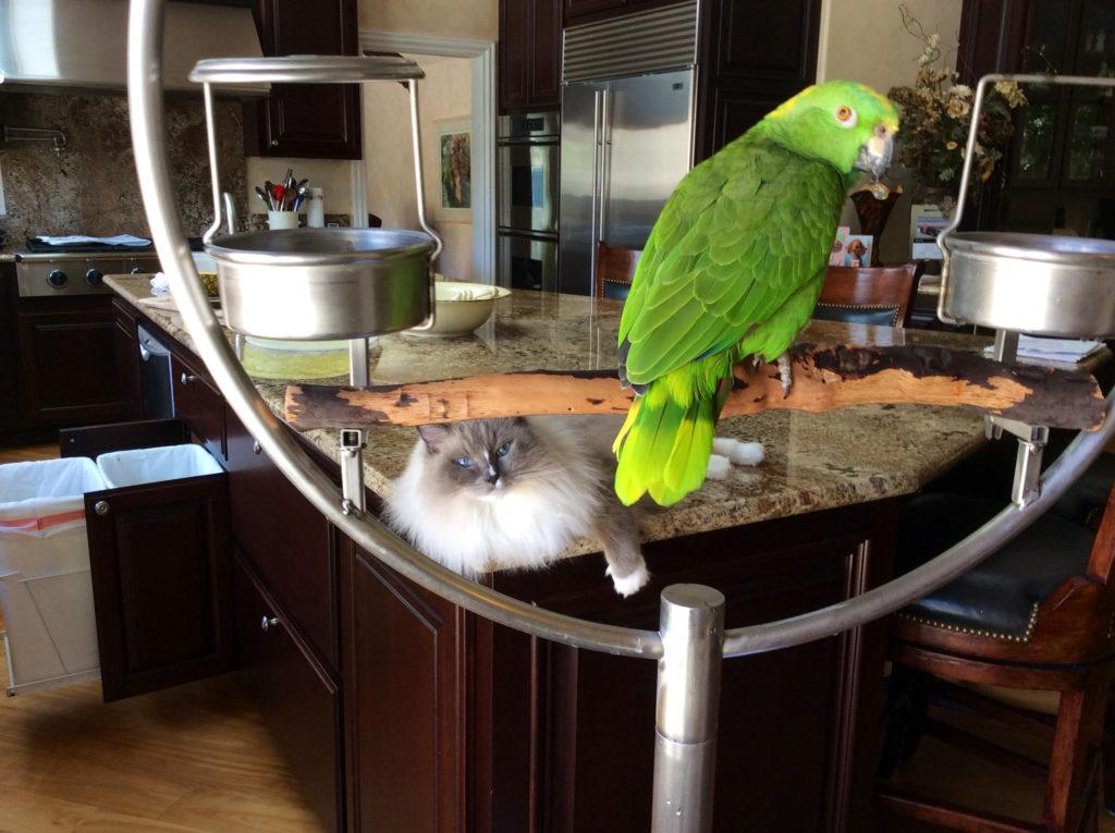 Pet Care Pro