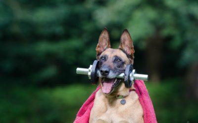 Canine Dental Health