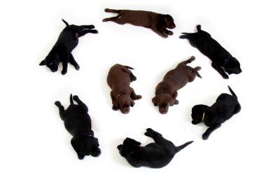 Bringing Home a New Puppy:  Your Essential Guide
