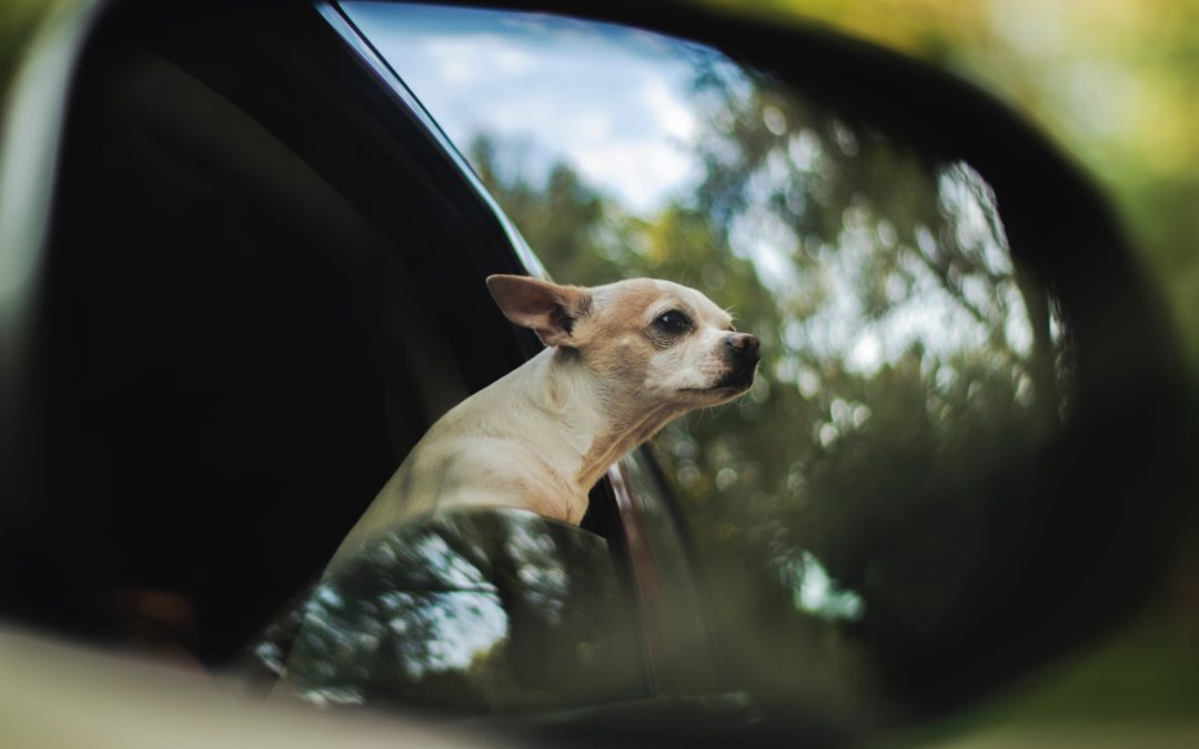Tips for Traveling Safely with Your Pet