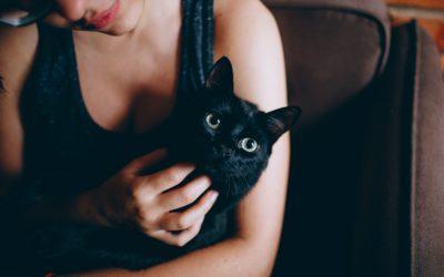 June is Cat Adoption Month