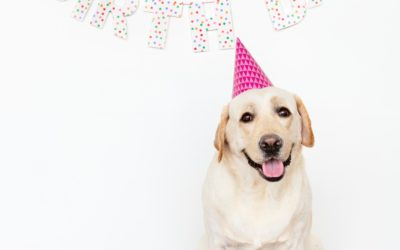 How To Throw a Dog Party
