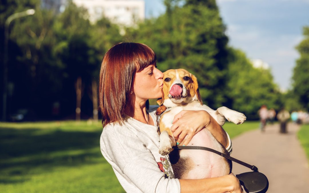 Tips to Keep Your Pet Safe
