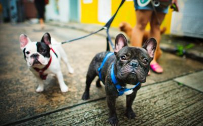 Why a Harness is Best for Your Dog