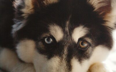Prep Your Pet for Life After Quarantine