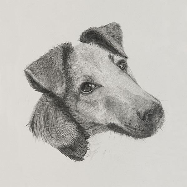 Austin Dog Illustration by Harv Craven