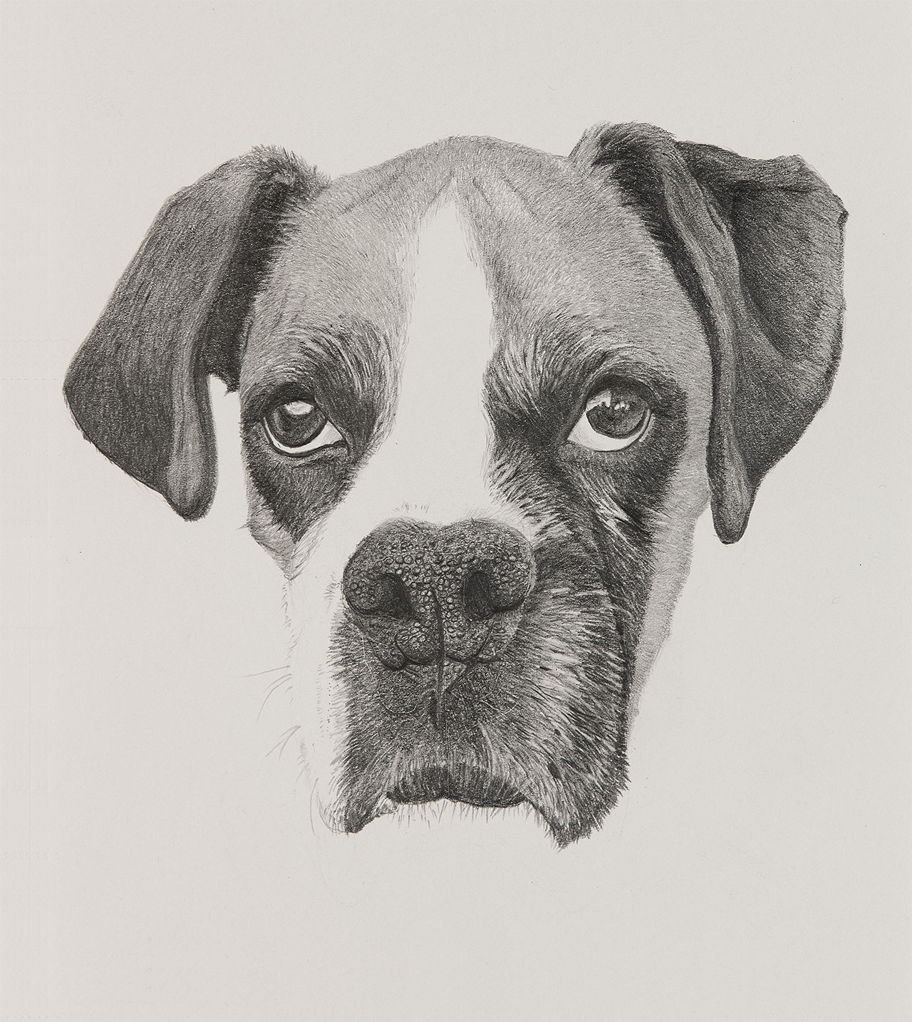 CC Dog Illustration by Harv Craven