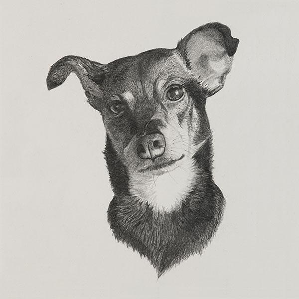 Cookie Dog Illustration by Harv Craven