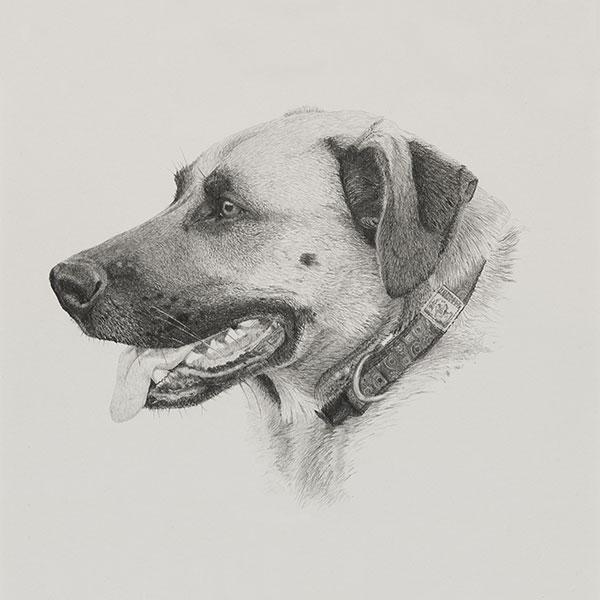 Elwood Dog Illustration SM by Harv Craven