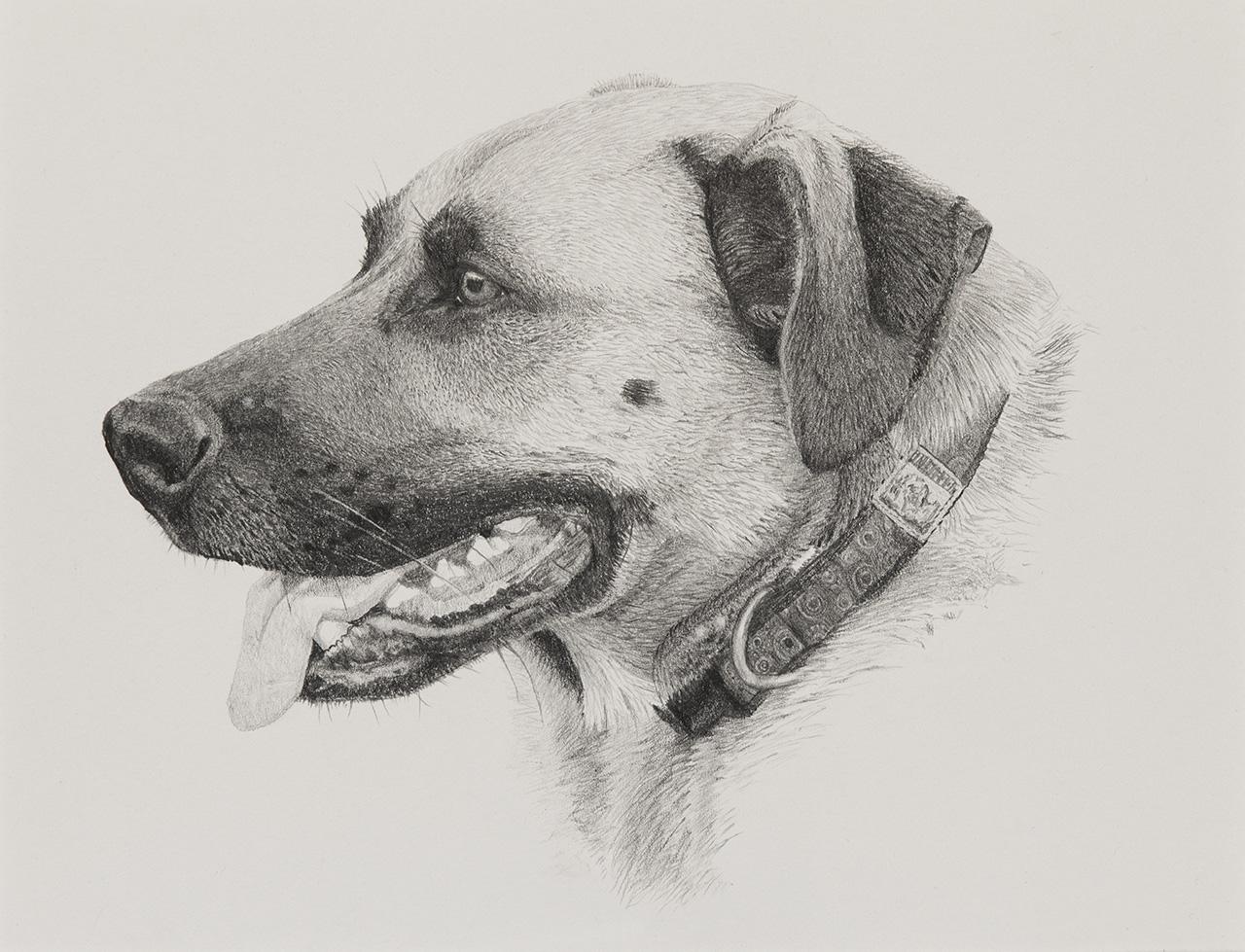 Elwood Dog Illustration by Harv Craven