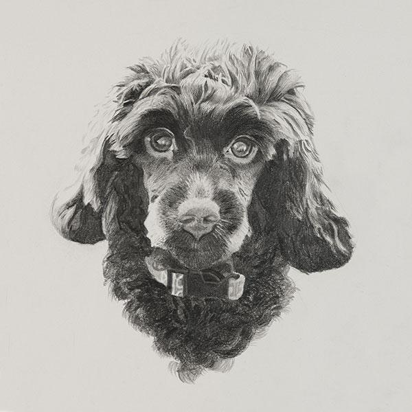 Winnie Dog Illustration SM by Harv Craven