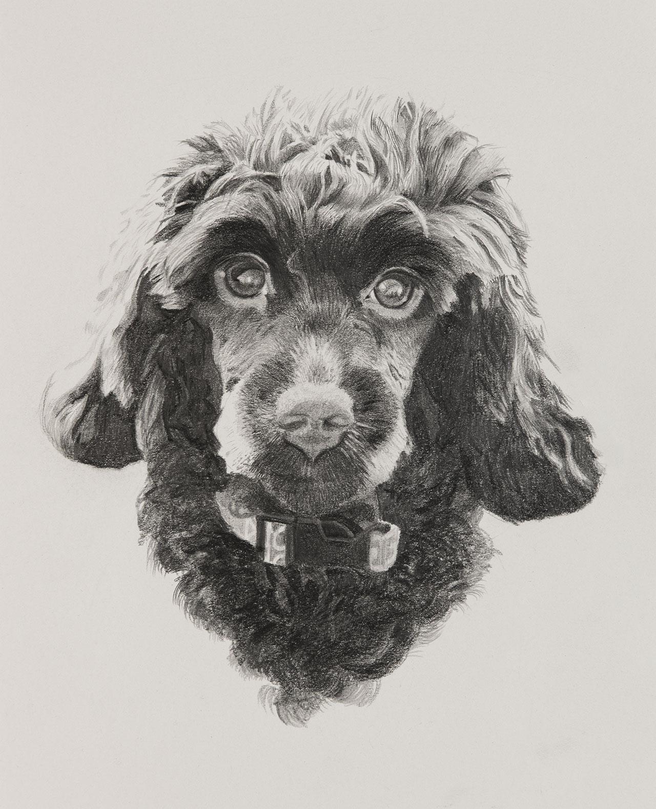 Winnie Dog Illustration by Harv Craven