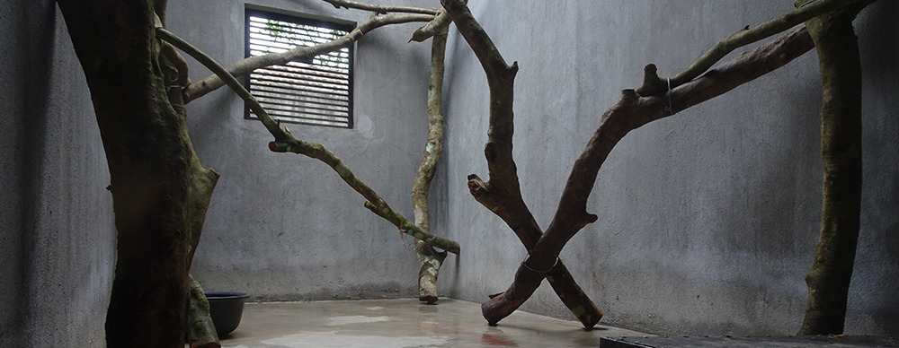 More quarantine enclosures to deal with increased pangolin confiscations