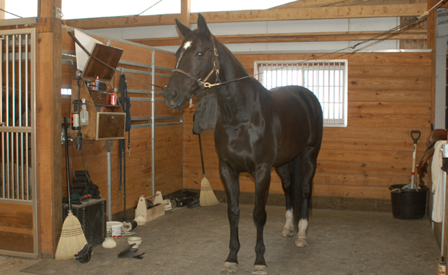 Grooming Stall at Autumn Road Farm