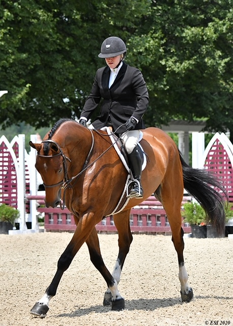 Quintos owned by Parvin Work (Sara Rhodes riding)