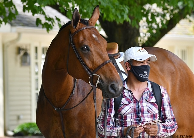 Quintos (owned by Parvin Work) and Jesus Ruiz