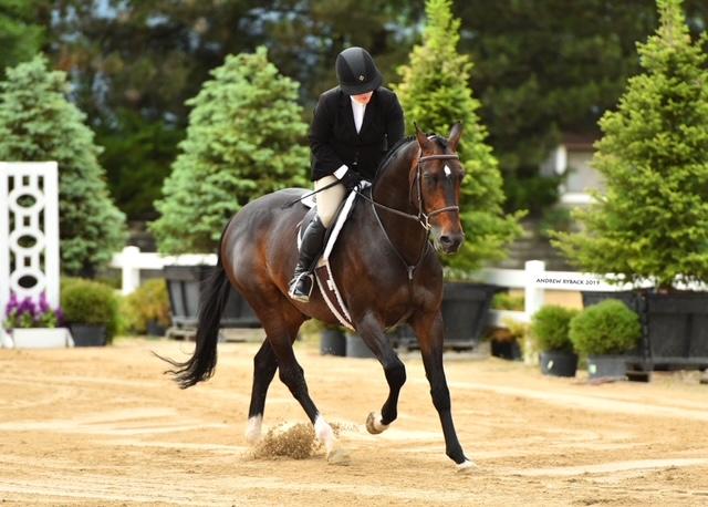 Jetalon ridden by Sara Rhodes owned by Monica Possekel