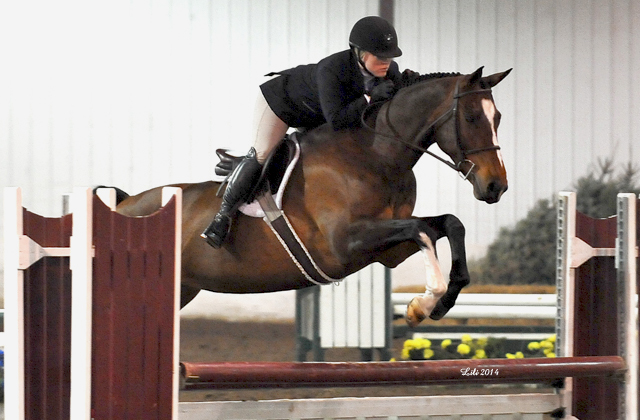 Contessa   Ridden by Sara Rhodes, owned by Honor Pickus