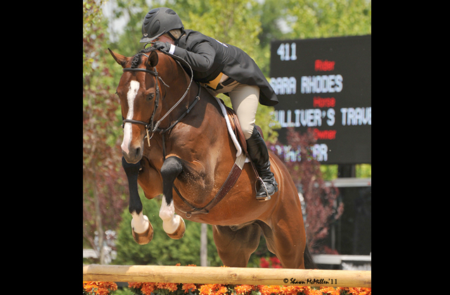 Gulliver's Travels | Ridden by Sara Rhodes, ownded by Sarah Orr