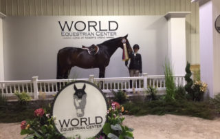 Emily Yslas at the World Equestrinan Center | April 2017