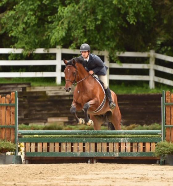 Quintos   Horse for sale