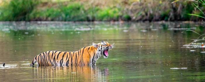 Pench National Park,Pench