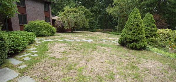 7 Top Keys Easily Stop Lawn Drought Damage