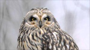 Free Again Wildlife Rehabilitation: Short Earred Owl @ The Science Center