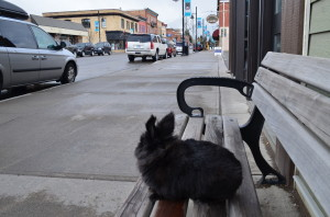 Ill just sit on this bench until somebody comes up and pets me